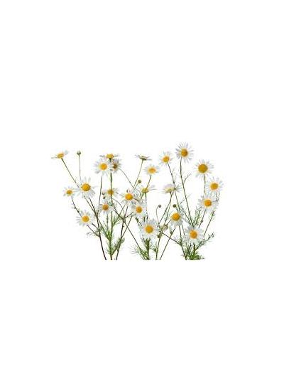 Natureal Organic chamomile water 250ml